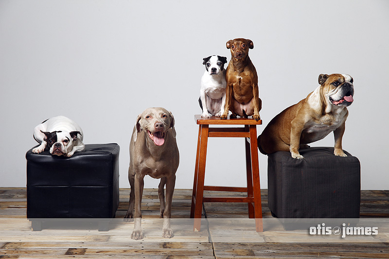 SVAS Pet Pics!  Now Online!